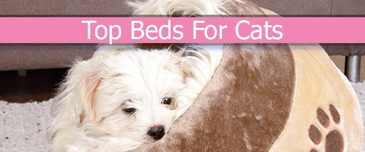 Top Beds For Cats
