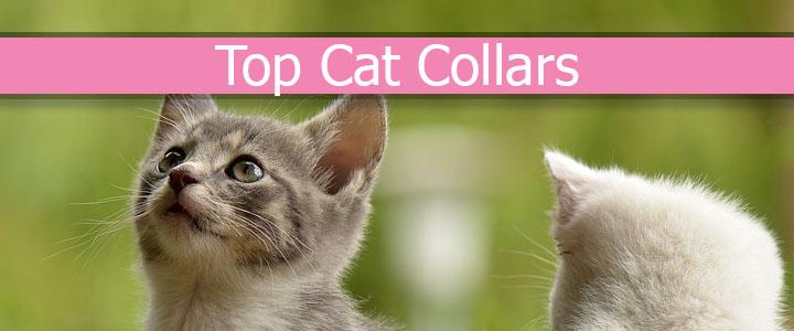 Top Cat Collars