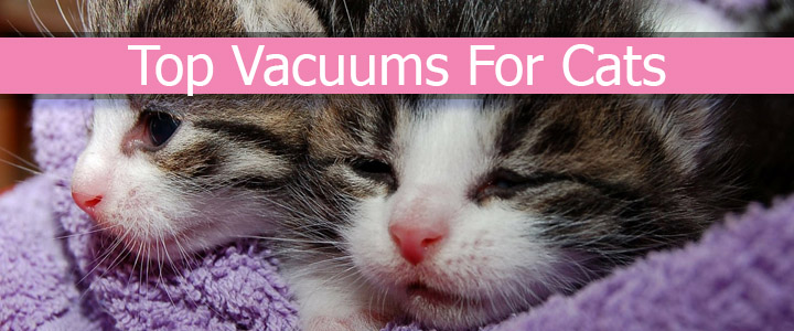 Top Vacuums for cat Hair